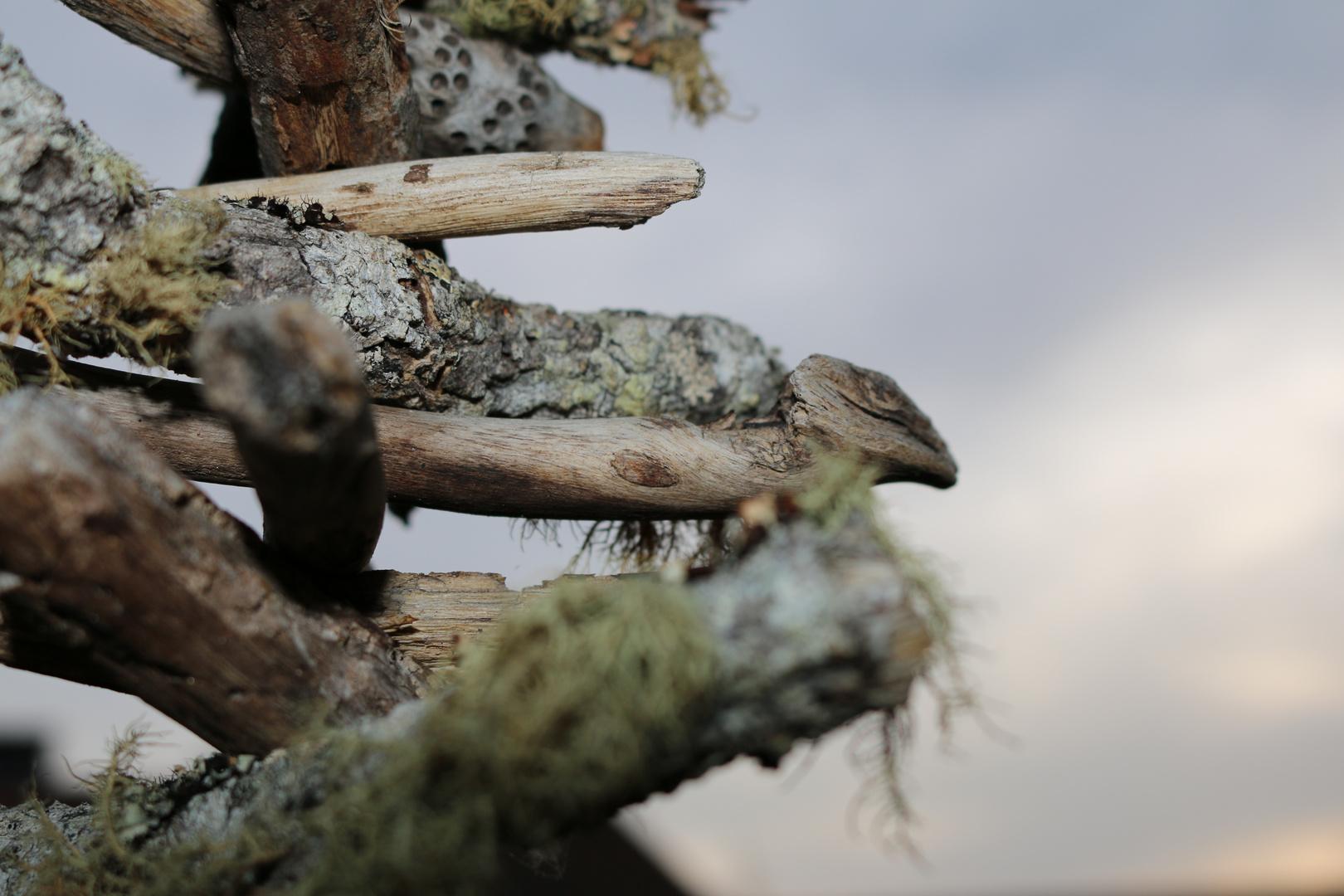 Australisches Holz am laufenden Band