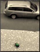 Auto und Skarabäus