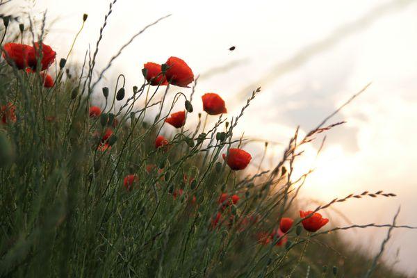 Autobahn Blumen