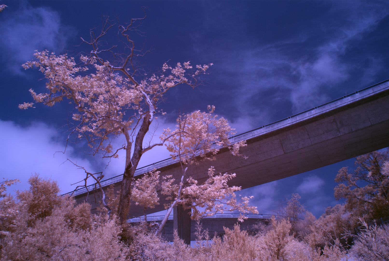 Autobahnbrücke über Wald