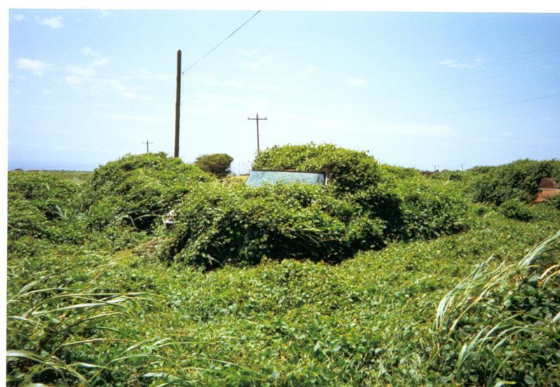 Autofriedhof  auf  Hawaii