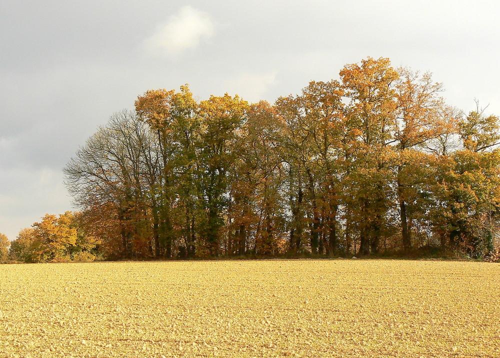 automne à Le Verger -