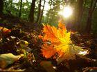 automne bis