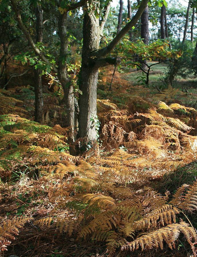 automne dans le Morbihan