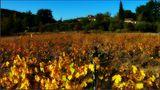 Automne dans les vignes de Figanières - Var von Minniemouse83