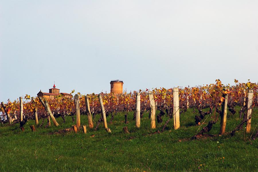 Automne dans les vignes du Beaujolais 2