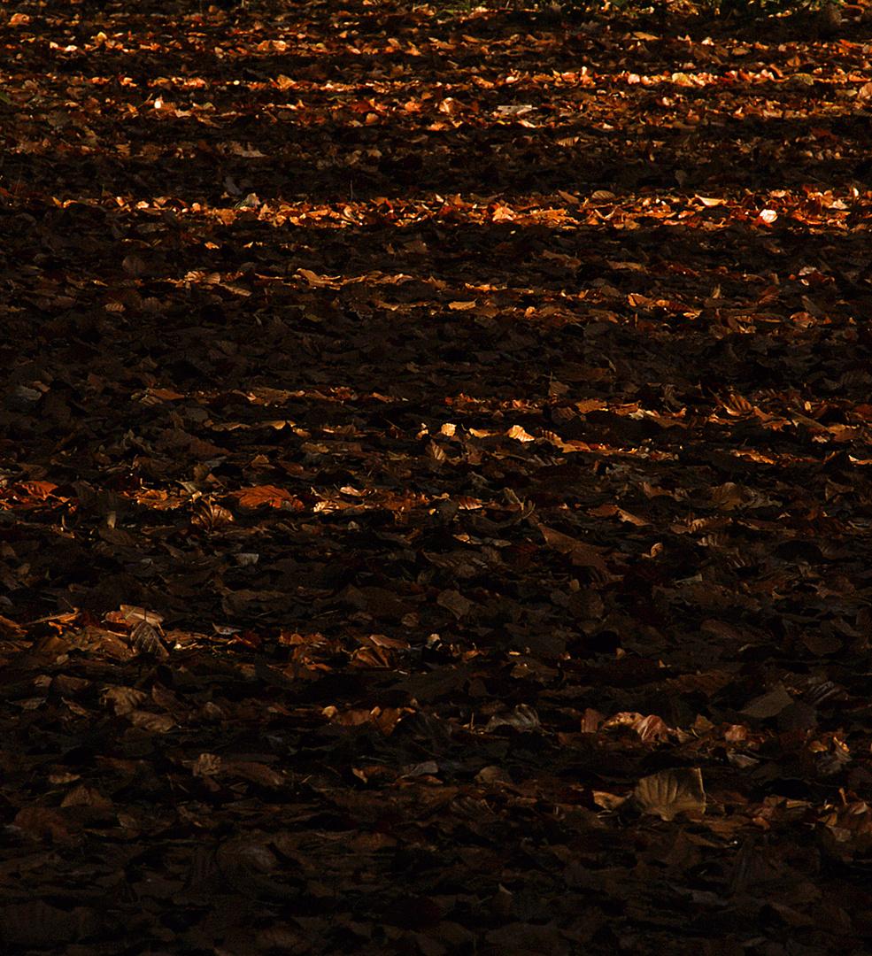 automne....