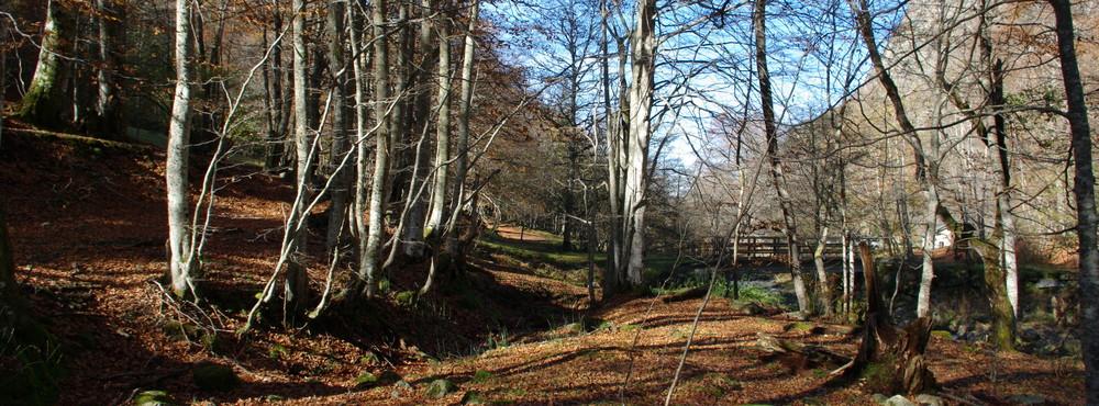 automne en vallée d'orlu - dept 09 france