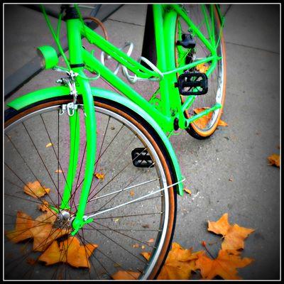 Automne en vert