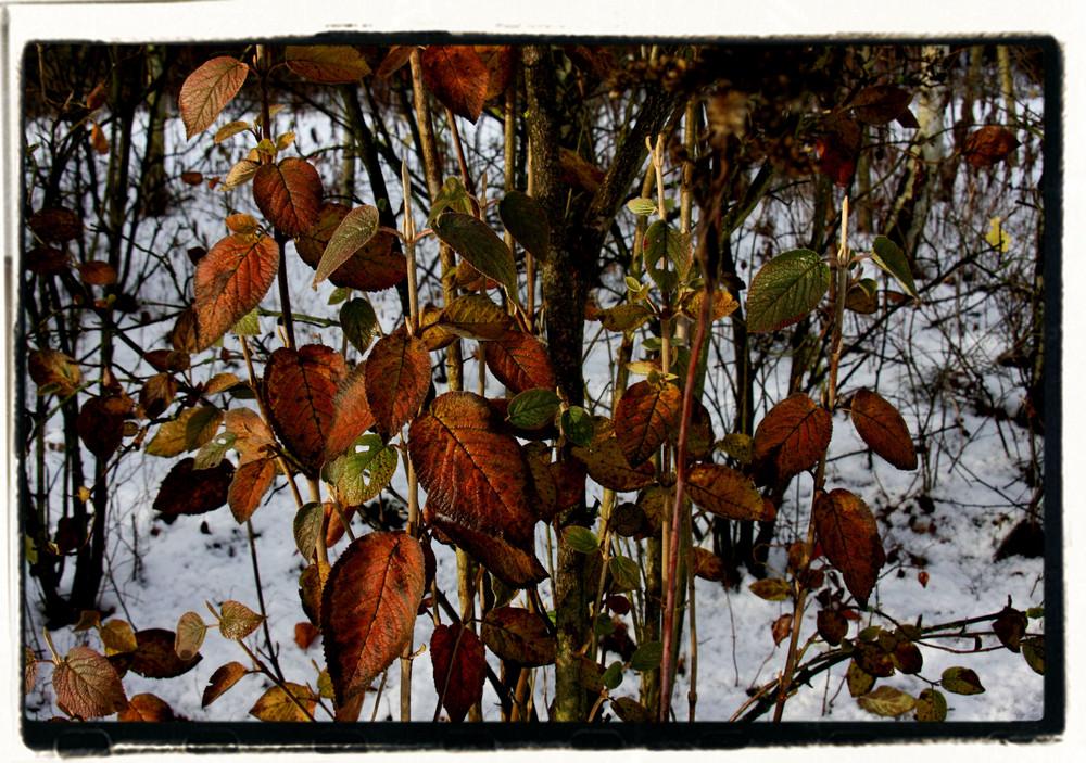 automne et hiver
