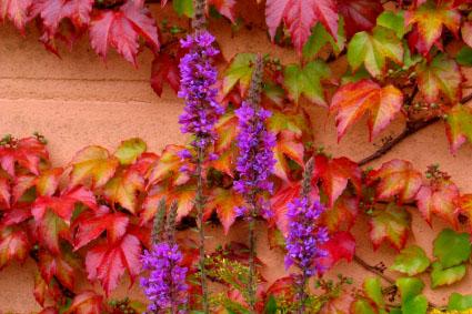 automne fragile