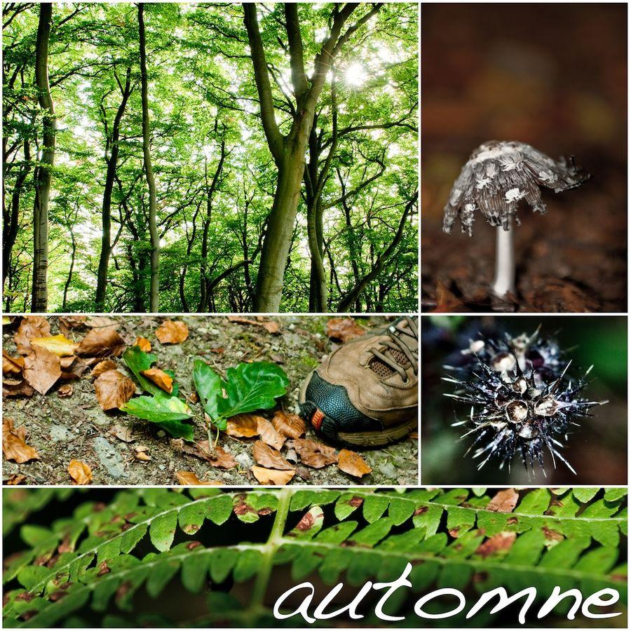 automne (frz. für Herbst)