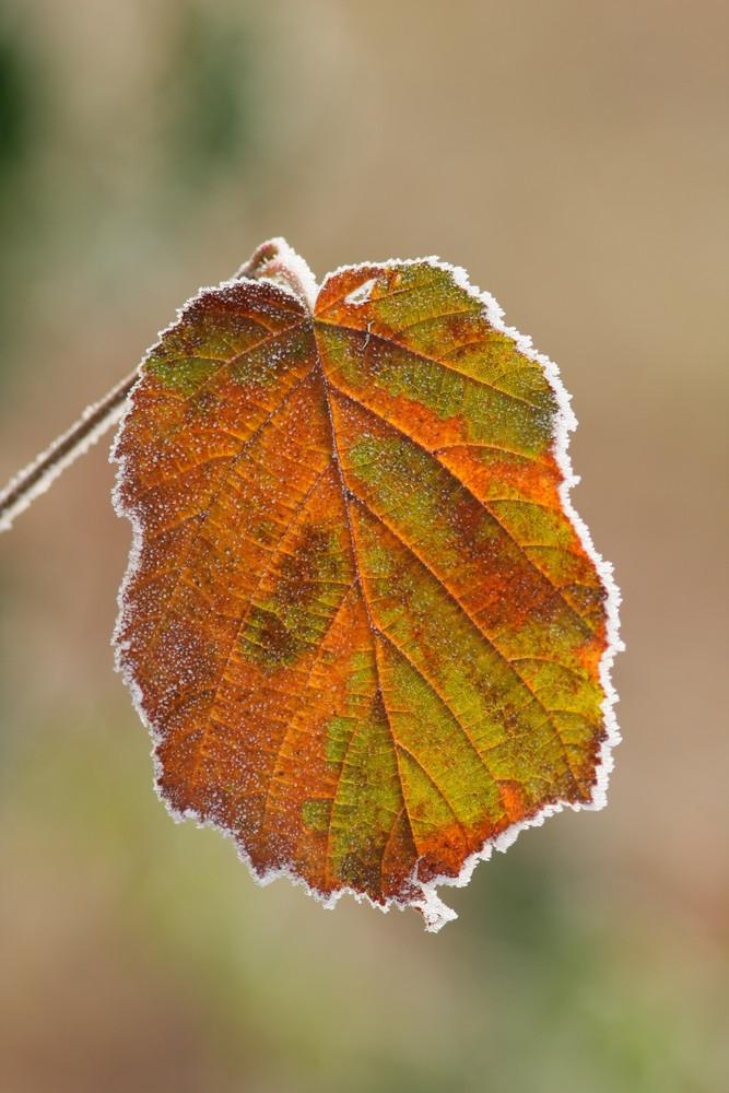 automne gelé