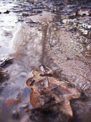 automne humide