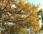automne près de Rennes