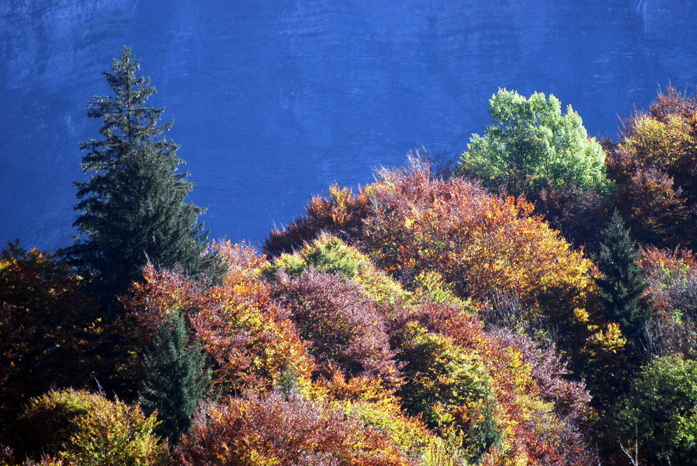 Automne Vallée du Giffre - 2007