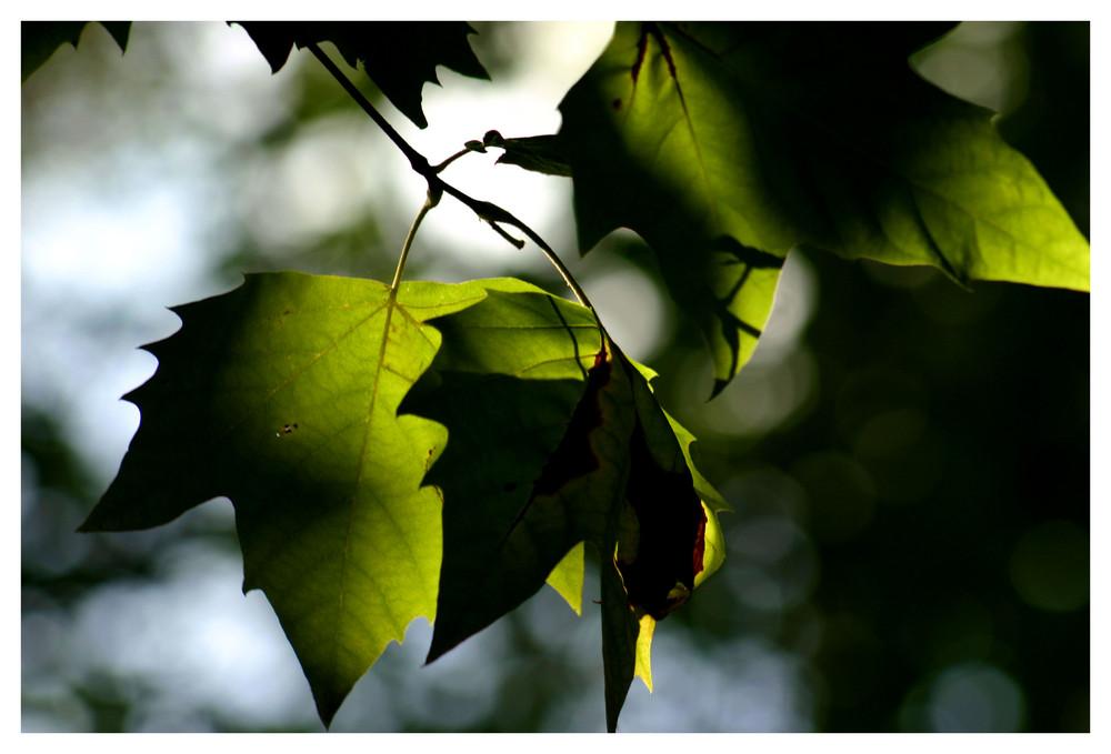 automne vert