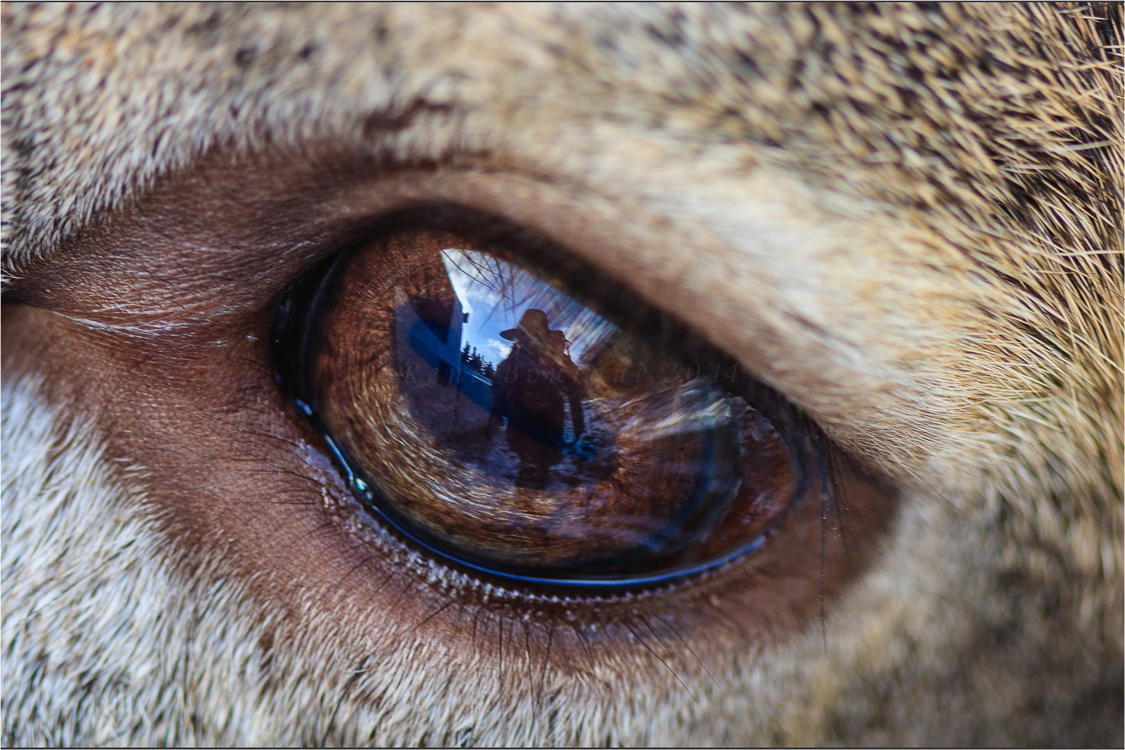 autoportrait dans un oeil de chevreuil photo et image