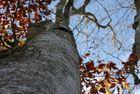 Autoportrait d'un arbre...