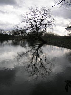 autour d'un étang