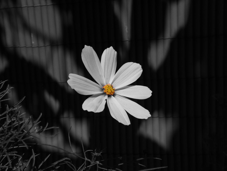 Autre fleur d'été