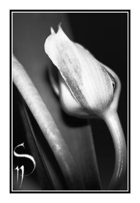 Autre regard sur une Orchidée...