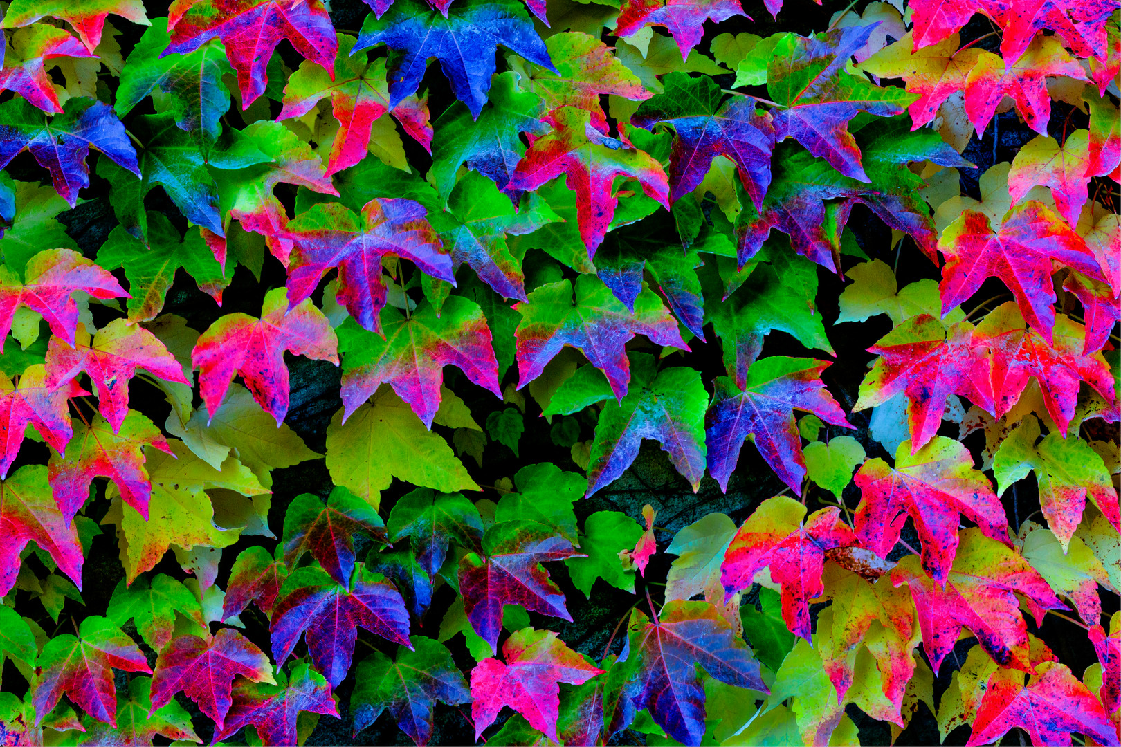 Autum Colors 2