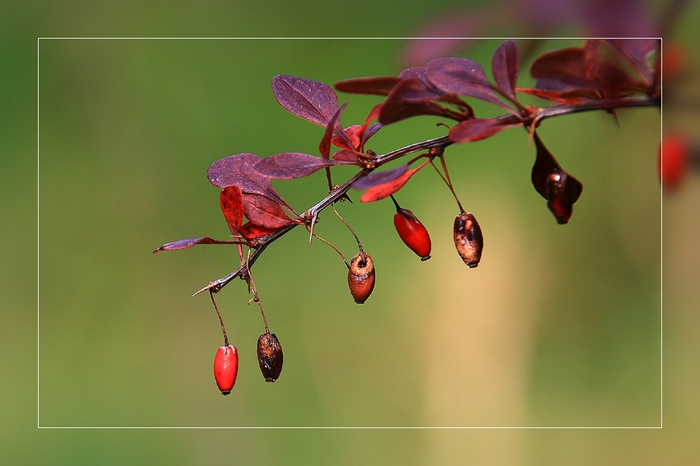 *autumn*