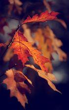 autumn `13