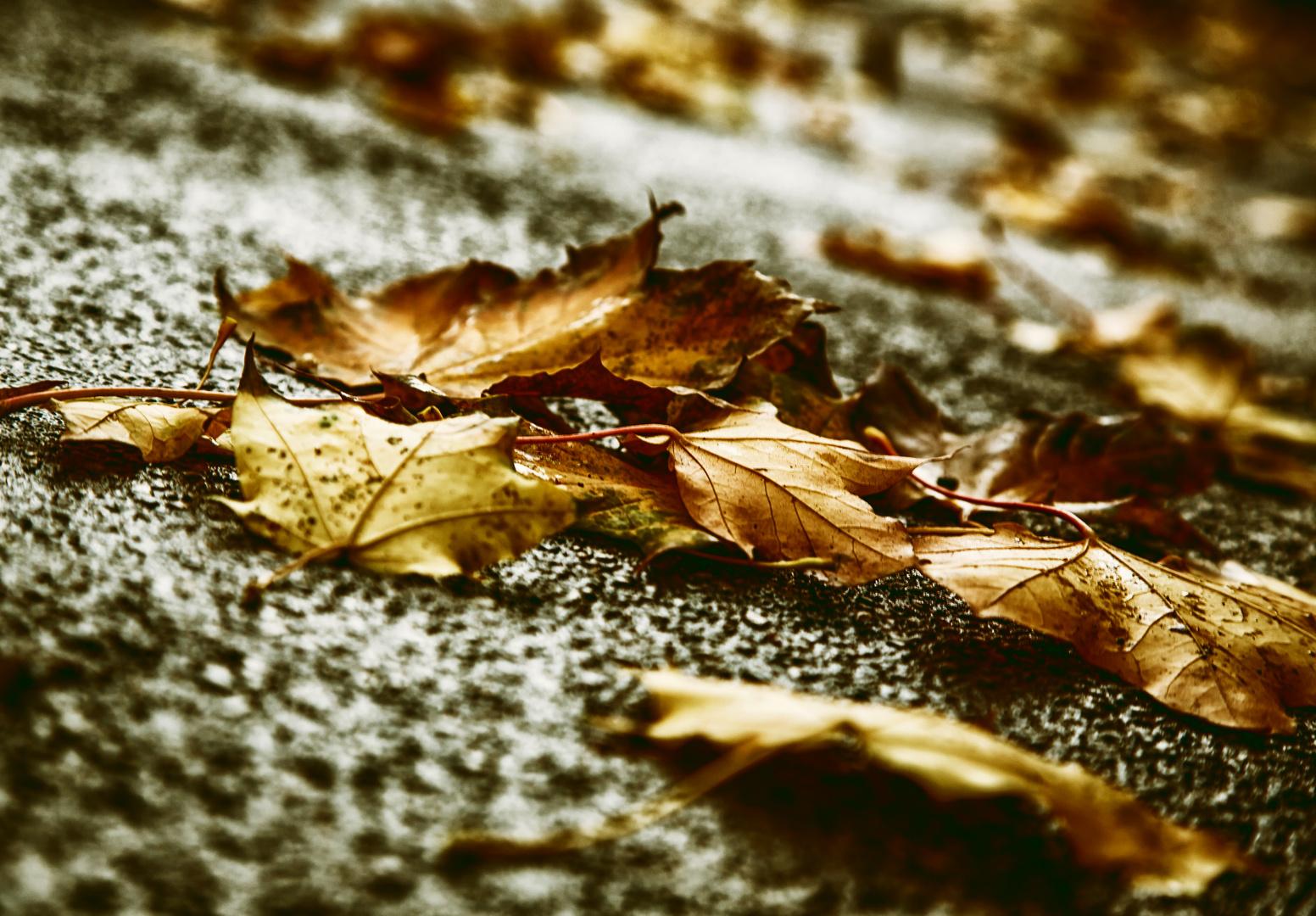 * Autumn 2013 *