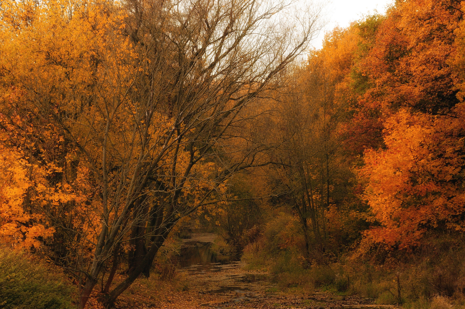 autumn at the creek
