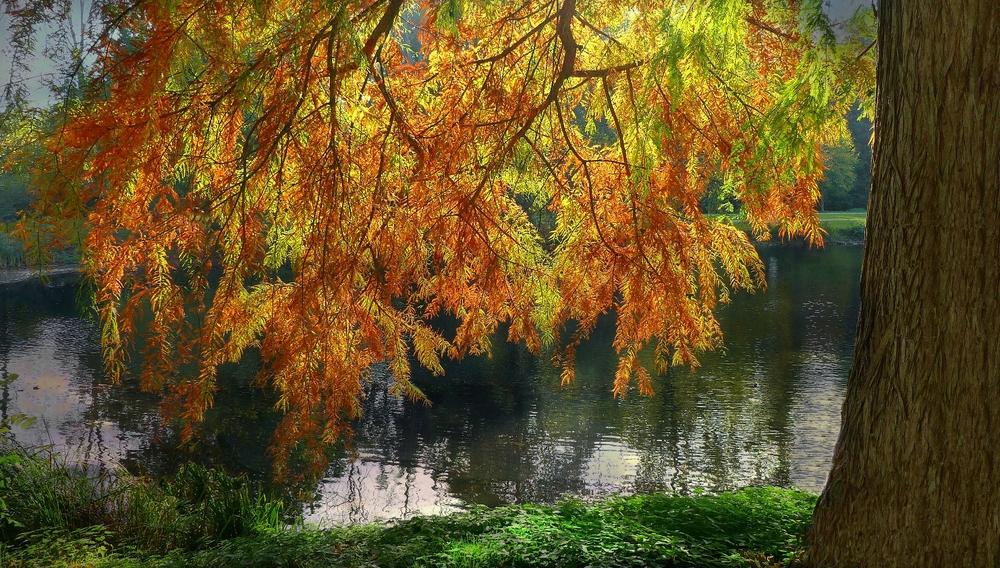 Autumn at the lake (13)