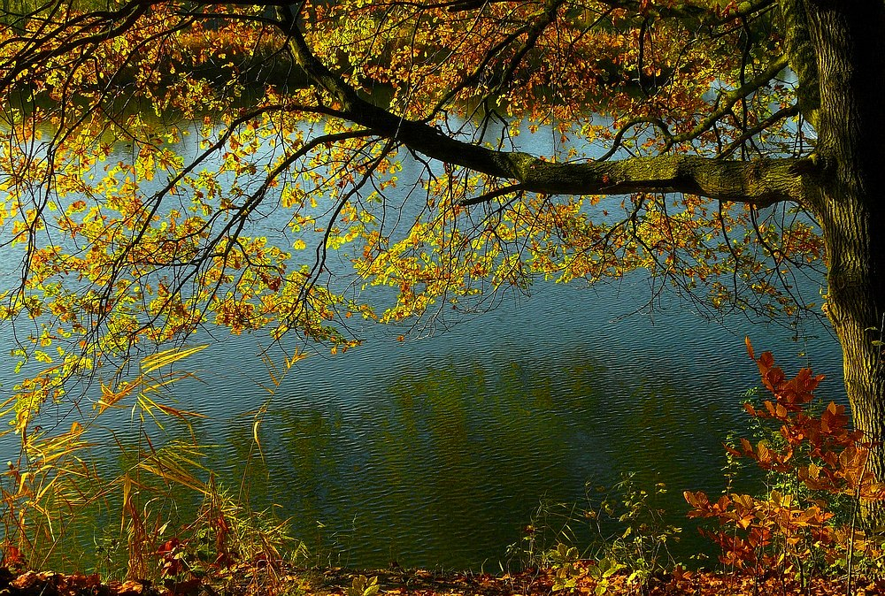 Autumn at the lake (5)