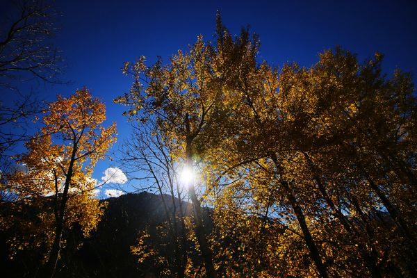 Autumn backlit