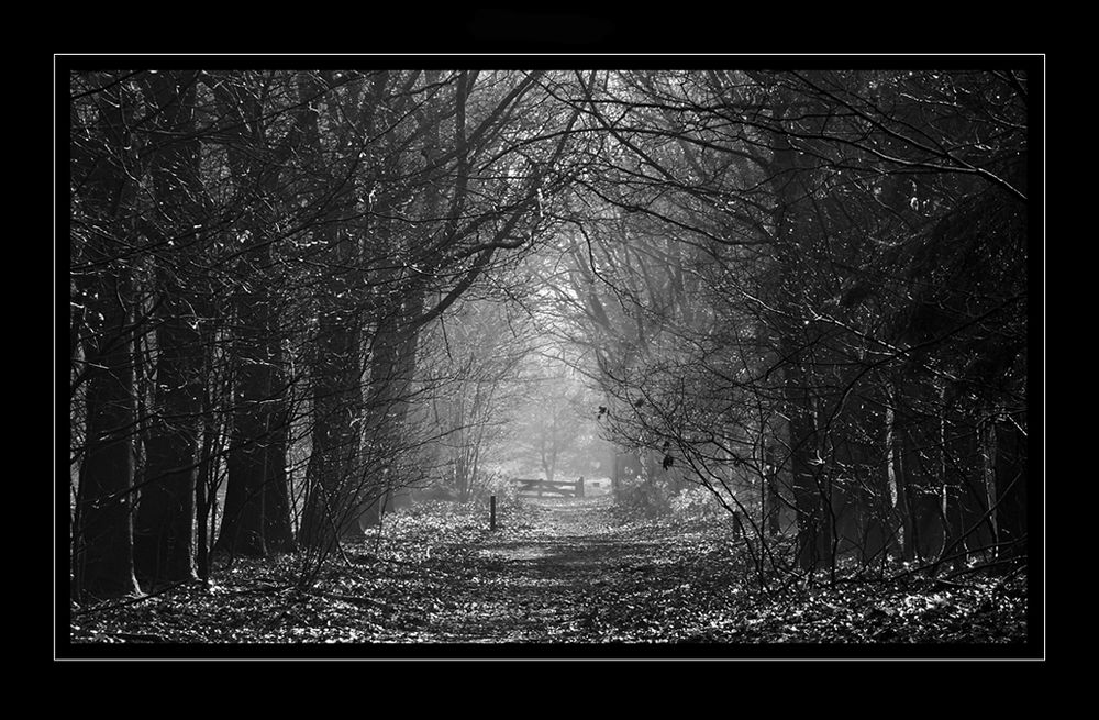 Autumn B&W by trix70