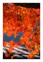 Autumn Color-3