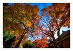Autumn Color in Kamakura-4