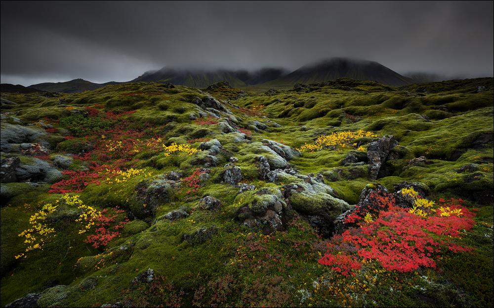 [ ... autumn colors ]