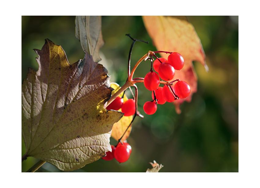 ...autumn colors...