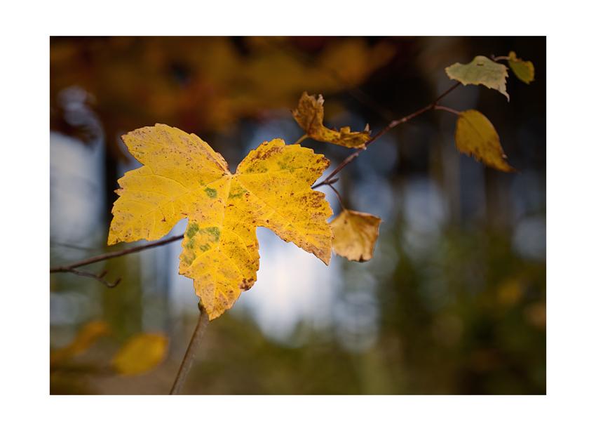 ...autumn colors I...