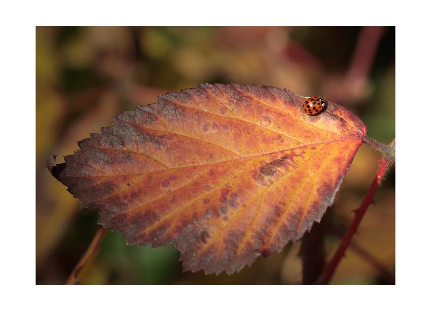 ...autumn colors III...