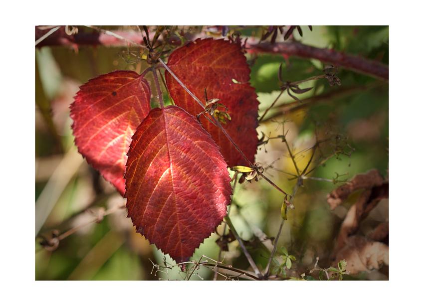 ...autumn colors VI...