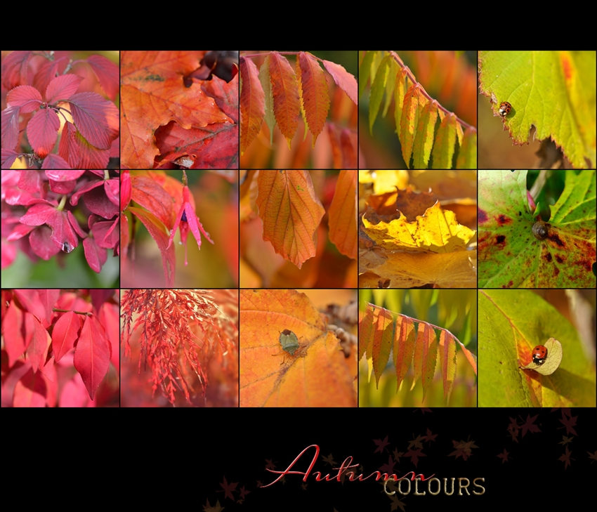 Autumn colours ..