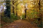 Autumn colours on my way