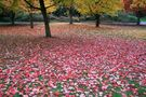 Autumn Comes to Vancouver (6) von Adele Oliver