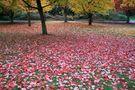 Autumn Comes to Vancouver (6) von Adele Oliver
