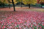 Autumn Comes to Vancouver (6)