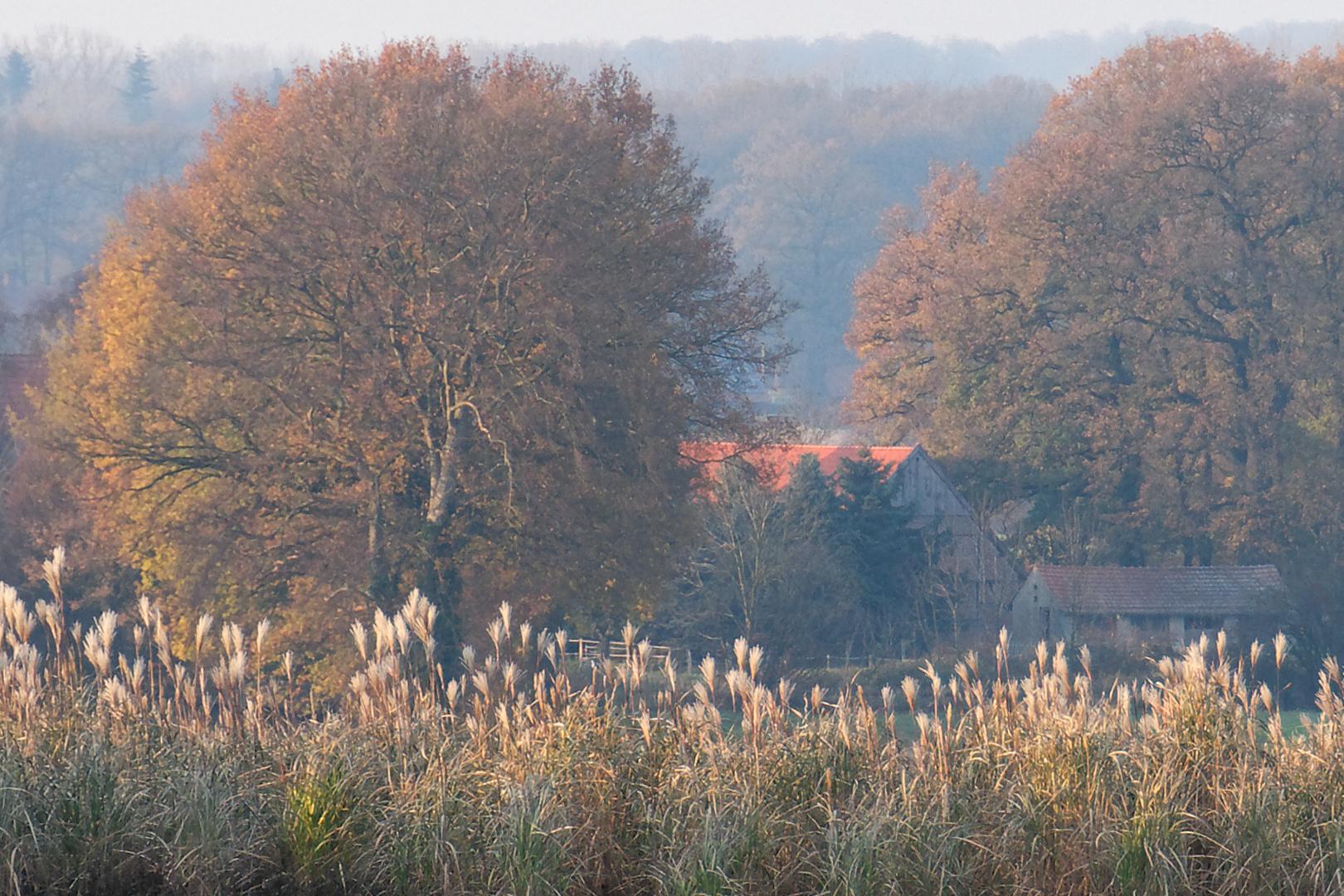 Autumn coulored Münsterland