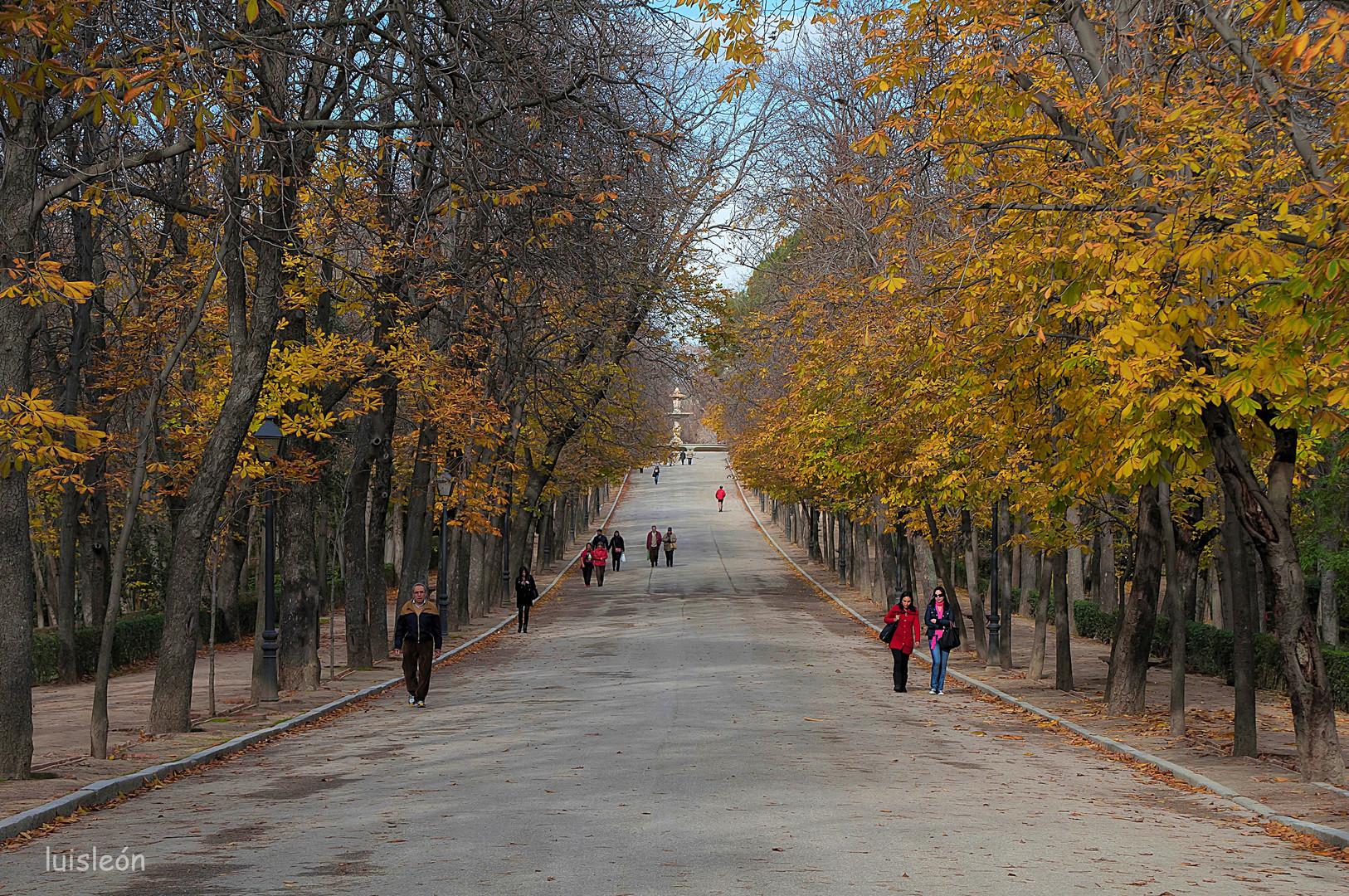 Autumn (DEF13)