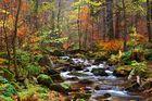 Autumn Dreamscape